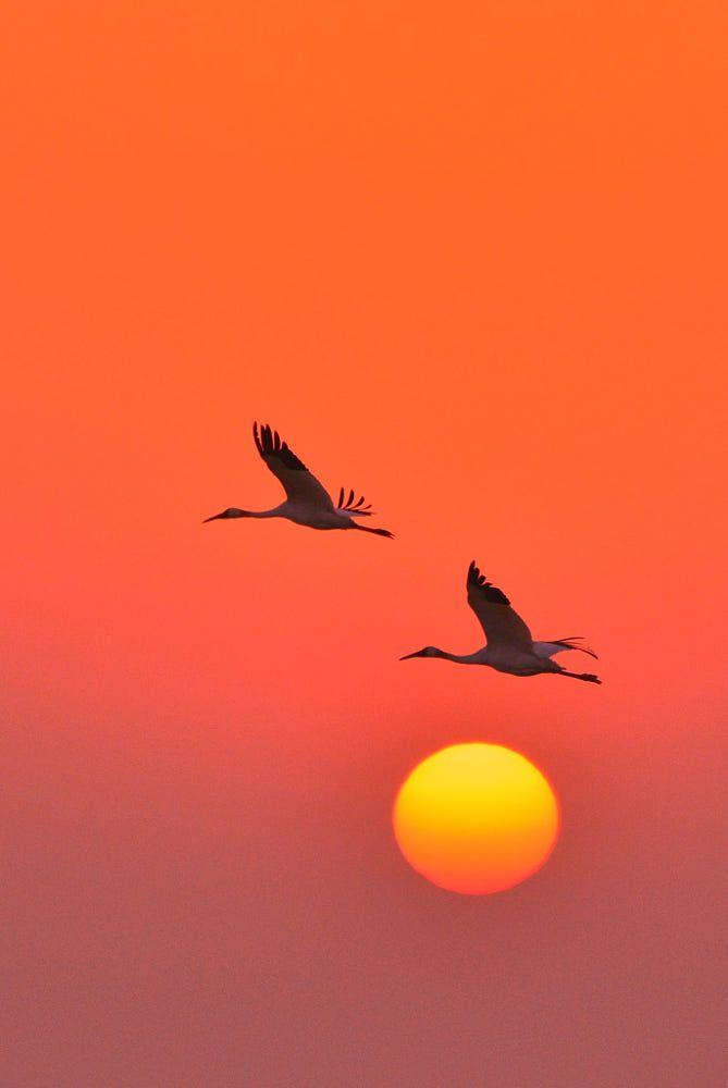 Sunset Flight Sunset Beautiful Sky Birds Beautiful Birds Beautiful Sky Sky Birds in sky desktop wallpapers free