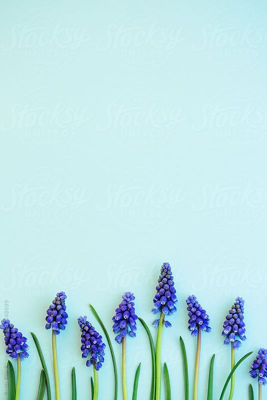 Grape hyacinths by Ruth Black