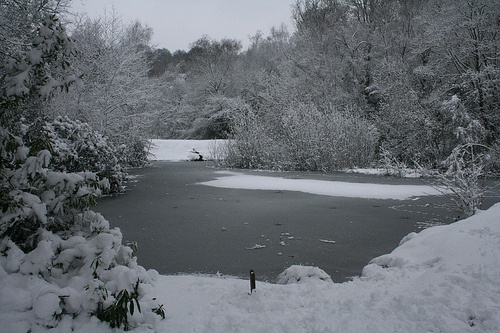 Rusthall Lakes, Tunbridge Wells - Kent.