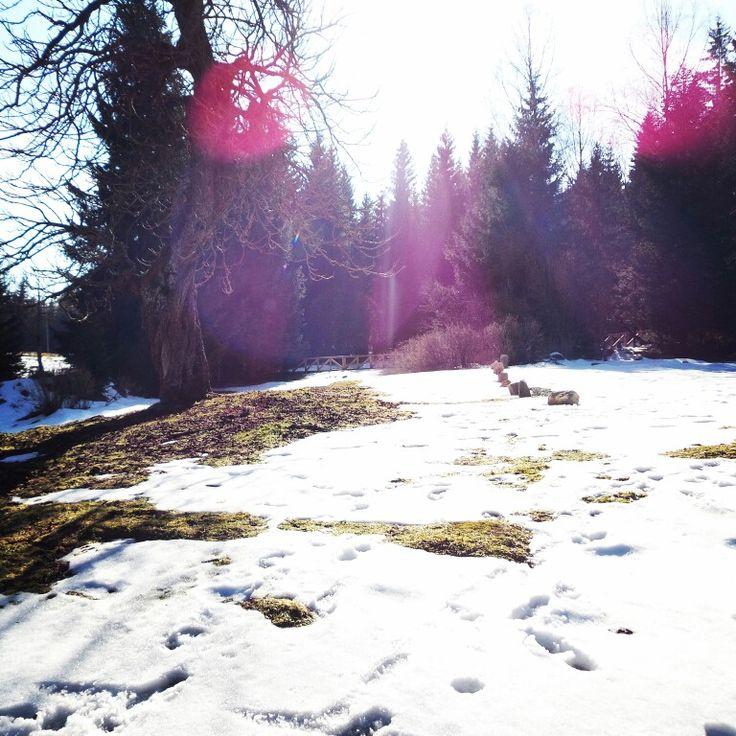 #wiosennie i #sniegowo w Górach Stołowych - #forest #las #śnieg #snow #mountains #góry #stolowe #slonecznie #slonce #sun #sunny #niedziela #sunday #dolnoslaskie #polska #poland #lubiepolske #ziemiaklodzka #batorów