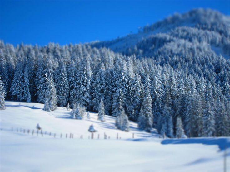 Salzburger Land, Russbach am Pass Gschütt. #winterimpressionen