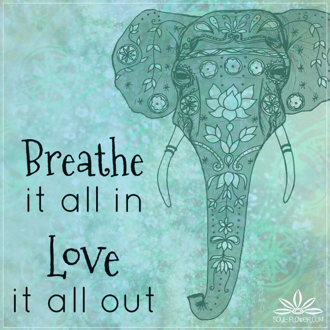1000+ Elephant Quotes on Pinterest | Thich Nhat Hanh ... - photo#37