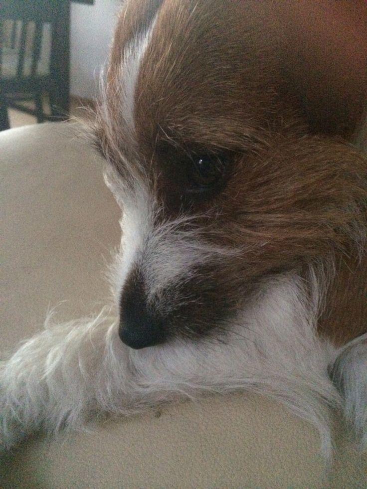 Vilma Furry-paws