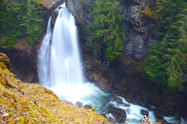 Lady Falls are just a 10 minute hike off of hwy 28 between Campbell River and Gold River and well worth the walk. http://www.paulsmithgallery.ca