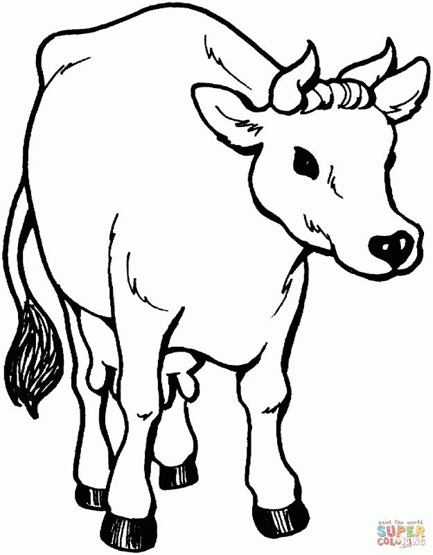 Picture Of Cows Coloring Pages Cow Coloring Pages Animal Templates Free Coloring Pages