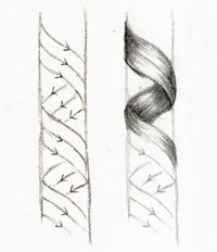 "Shading: Darken every tapered edge/corner by way of short, overlapping pencil strokes while taking care to leave a broad, central ""band"" of light through the apex of each curl"