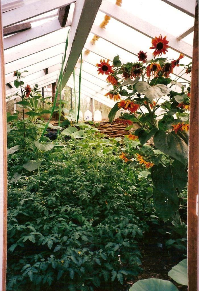 Filename Greenhouse 4 Jpg Description Greenhouse Plants Garden