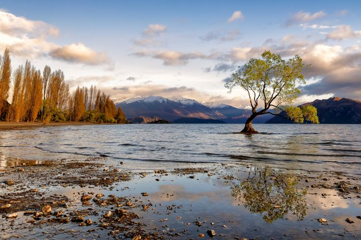 NZ Lonely Tree by David Buhler on 500px