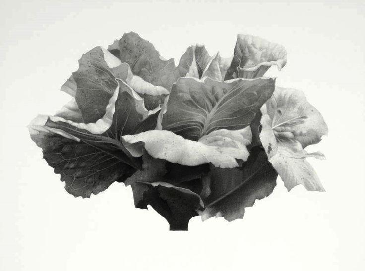 Jonathan Delafield Cook 'Lettuce I'  2014 #charcoal #lettuce #drawing