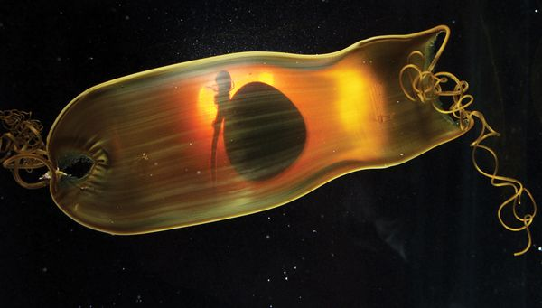 Swell Shark egg casing--amazing photo!