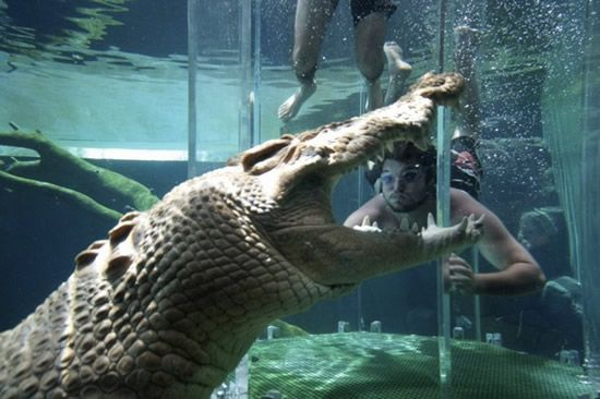 Croc diving at Crocosaurus Cove, Darwin, NT, Australia
