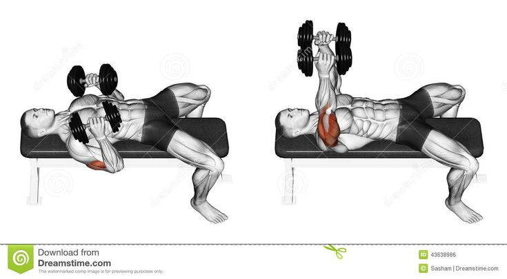 Nice Dumbbell Bench Press Lying Down With Y Stock Illustration   Image: 43638986  | Excersise | Pinterest | Exercises, Muscles And Weight Loss