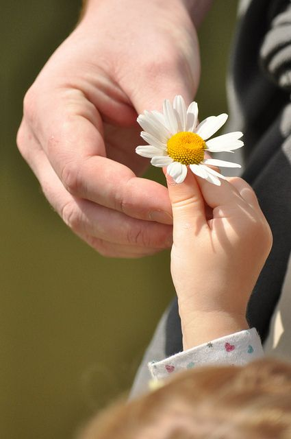 (13) Pin de Penha Alencar em MARGARIDAS   Pinterest #garden flower, #daisy