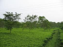 Terai - The Terai is a belt of marshy grasslands, savannas, and forests located south of the outer foothills of the Himalaya, the Siwalik Hills, and north of the Indo-Gangetic Plain of the Ganges, Brahmaputra and their tributaries. Wikipedia