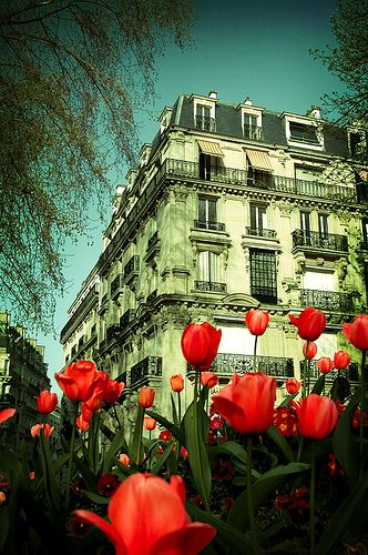 My two favorite things-Paris and tulips.    Red Tulips in Paris  by Juan Carlos Requena,