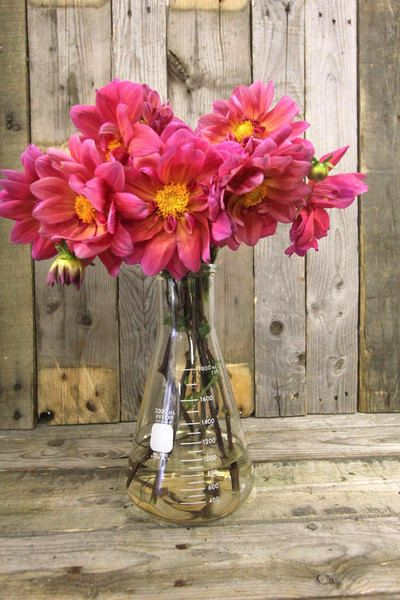 Vintage Pyrex Glass Beaker - What a great idea . . .  to use these vintage beakers for vases!