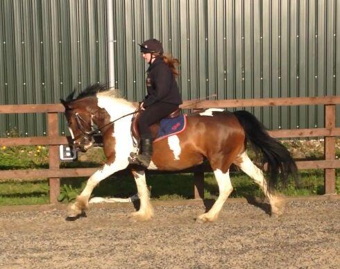Canter #equestrian