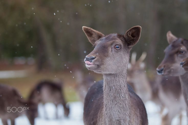 Enjoying snow by Michaela Smidova on 500px