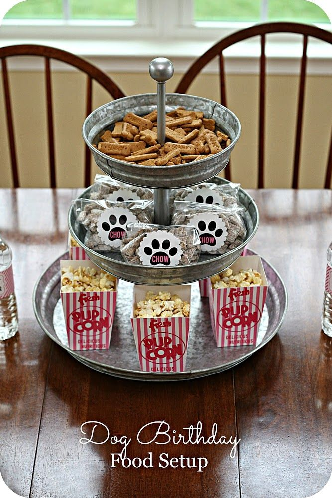 Cute Dog Birthday Party Ideas. Reward your dog with their very own party!