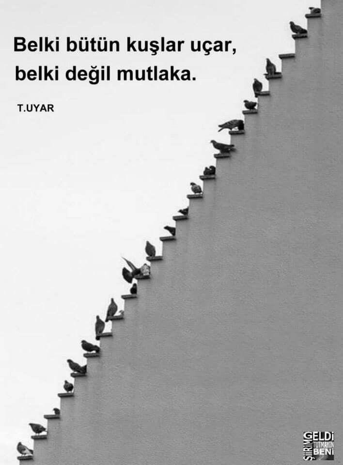 Belki bütün kuşlar uçar, belki değil mutlaka.  - Turgut Uyar