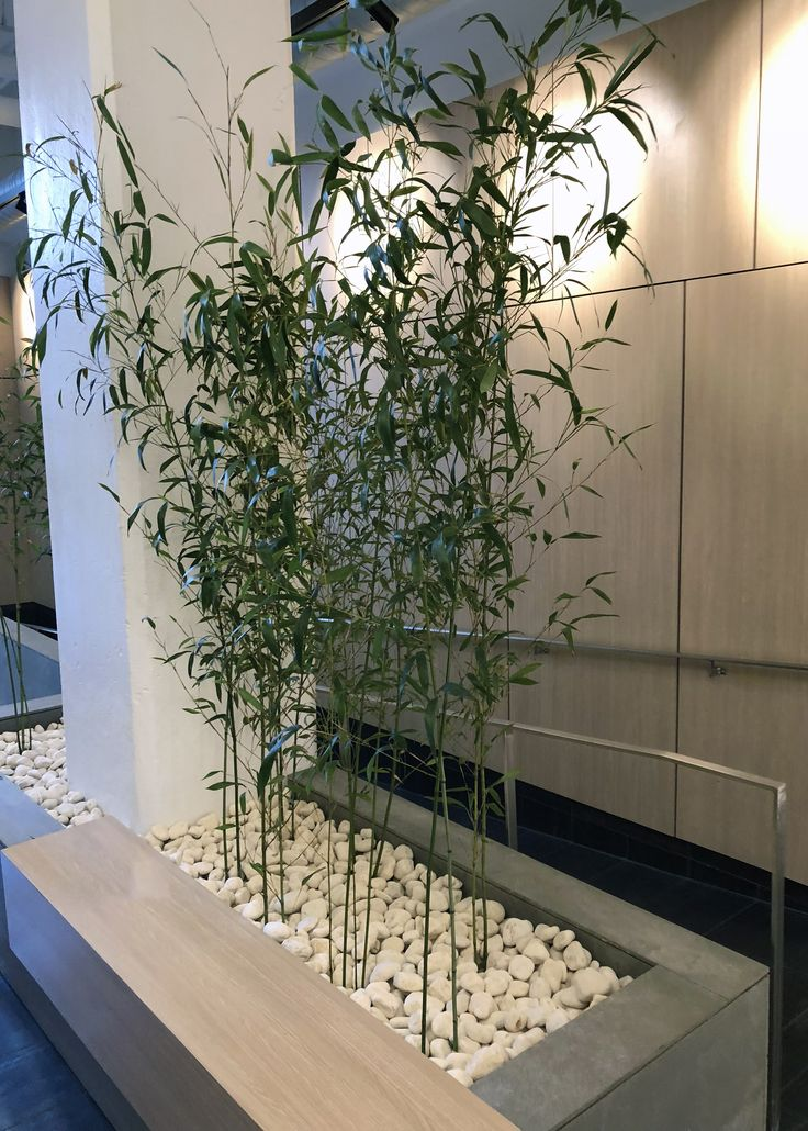 Nj Bamboo Landscaping: 11 Best Bamboo Installation Images On Pinterest
