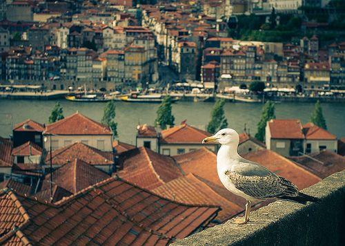 Um olhar sobre o Porto