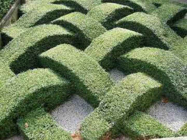 Boxwood hedge gardening landscape pinterest trees for Garden hedge designs