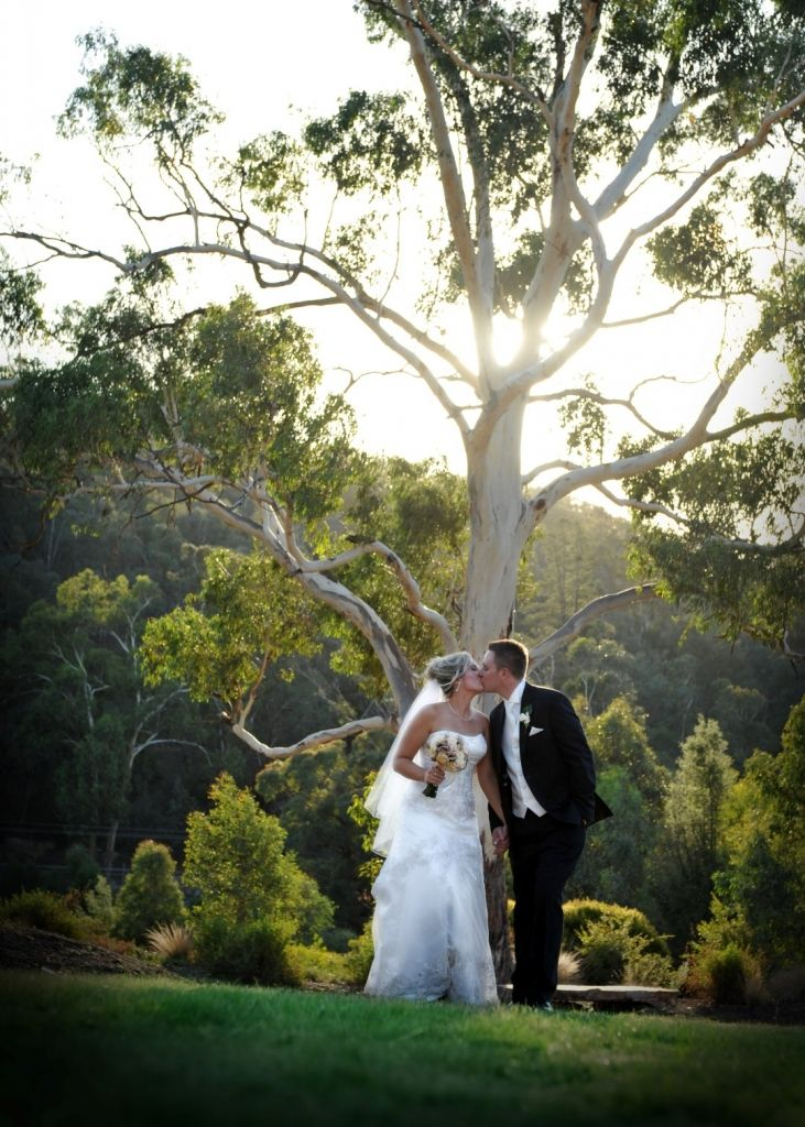 Gallery - Potters Receptions - Our big gum tree up the back...