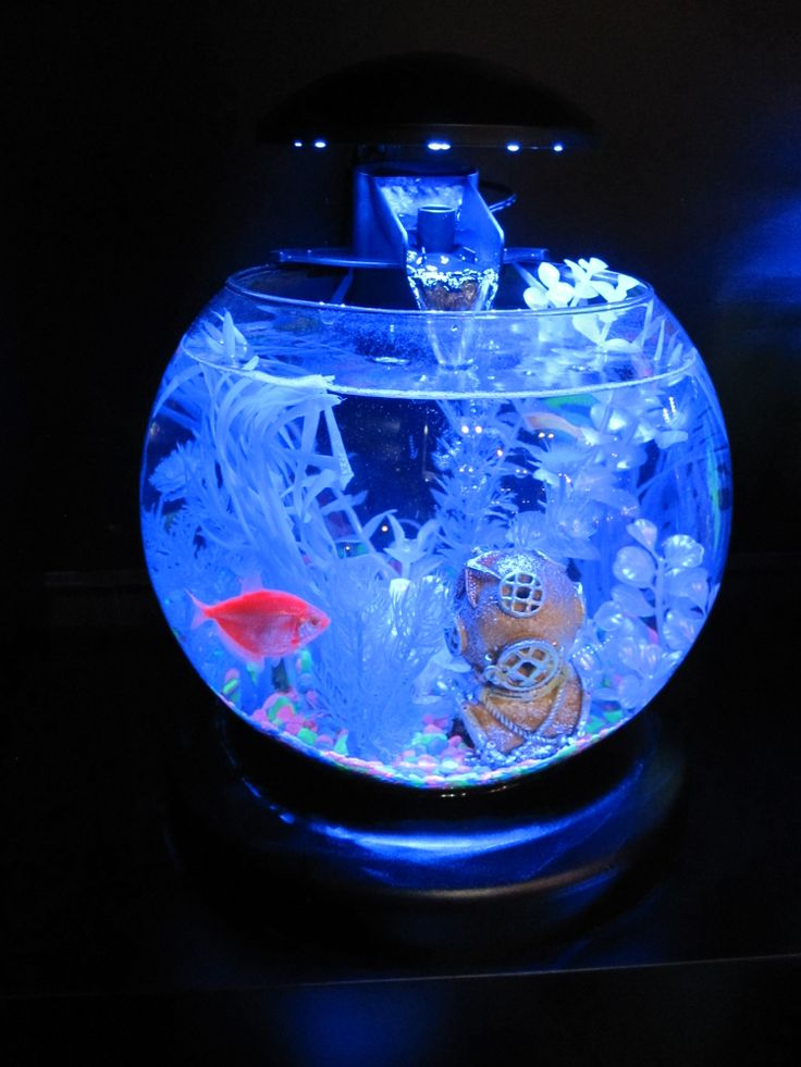 112 best glofish images on pinterest for Glow fish tanks