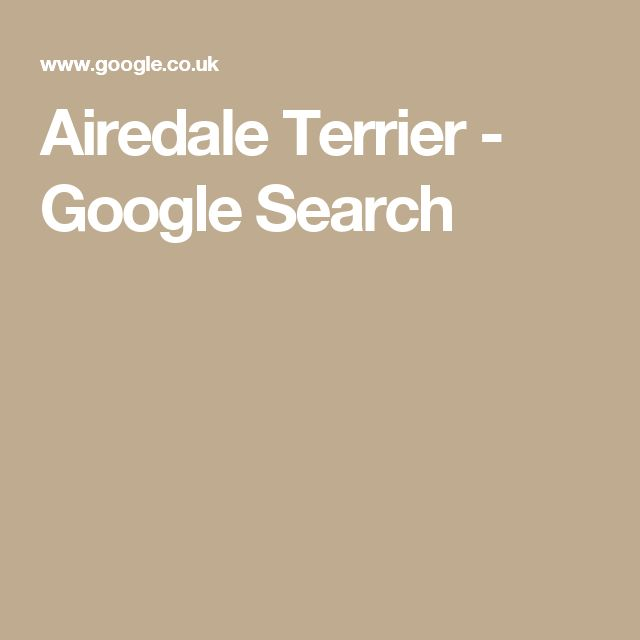 Airedale Terrier - Google Search