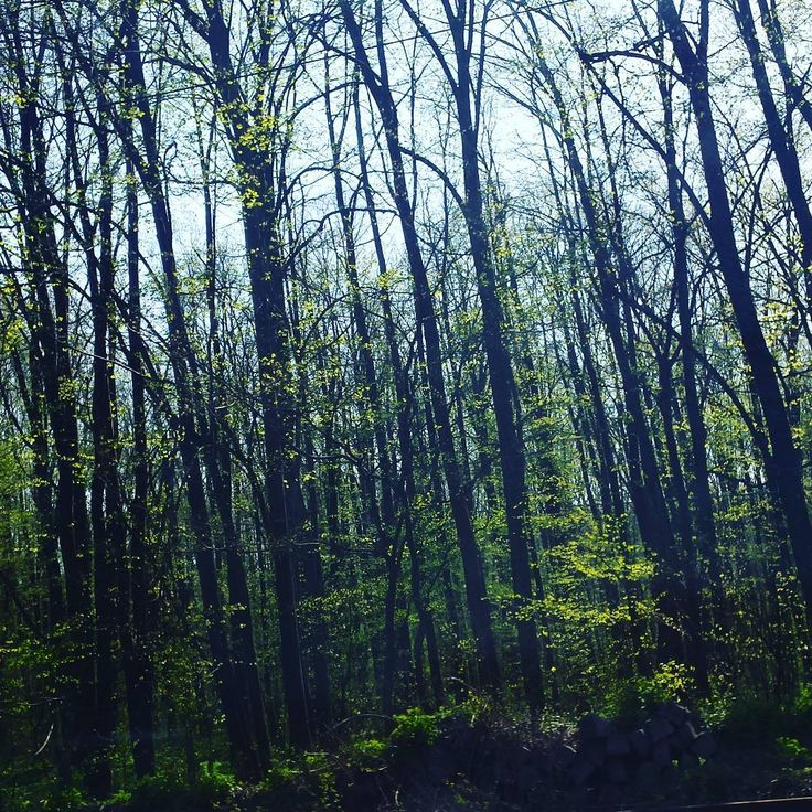 "12 aprecieri, 1 comentarii - Irina Tania (@irina.tania2004) pe Instagram: ""#forest #dark #beautiful"""