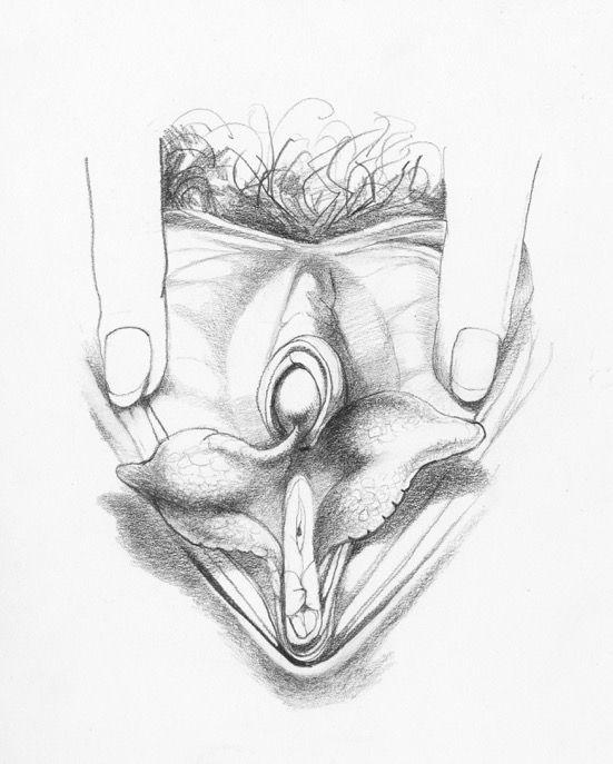 Modern Vulva