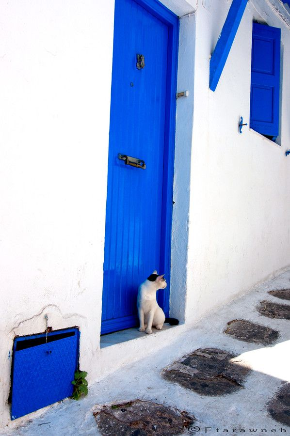 cat alley blues by Fadi Tarawneh on 500px