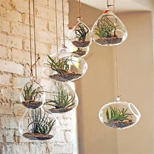 Set of 6   6″ Air Plant Glass Terrarium EGG Shaped Plant Holders Hardy House Plants