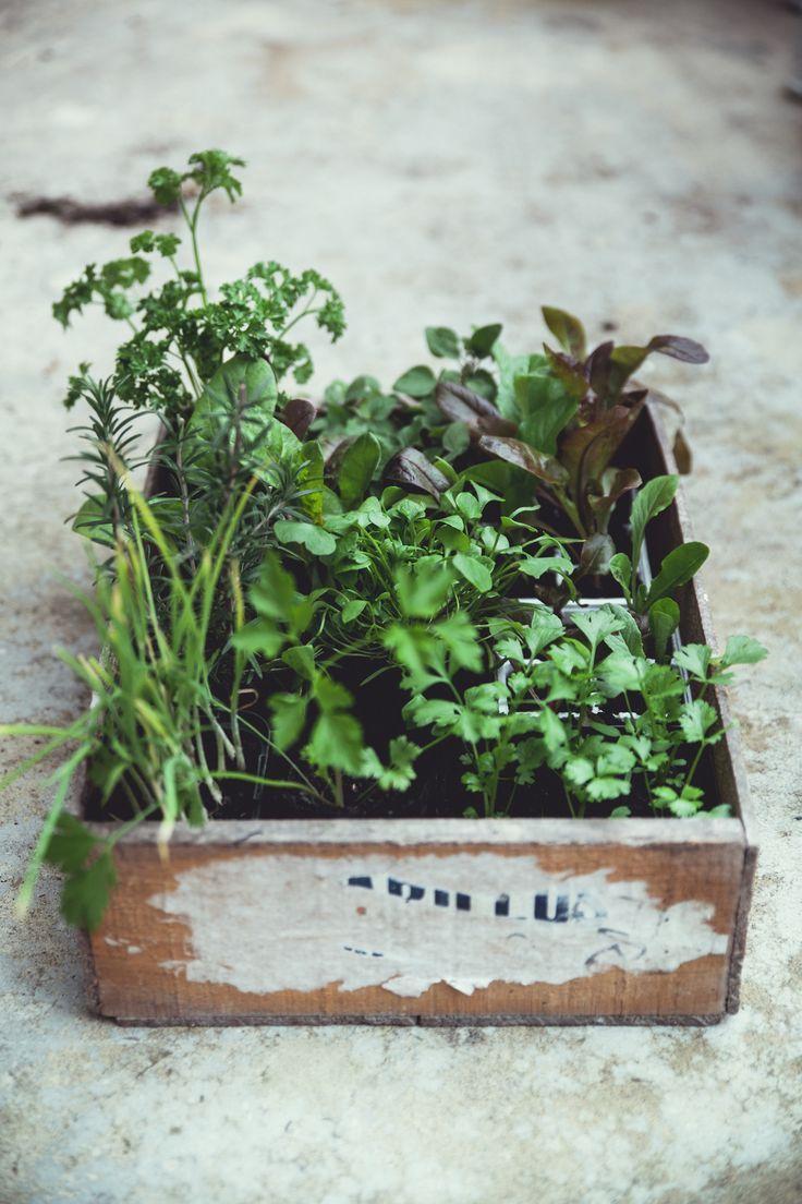 Kleiner Kräuter Garten