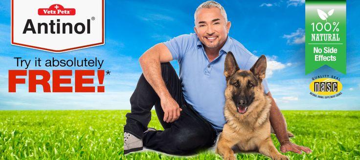 Royal Canin Feline Hepatic (HF26) Dry Food – 2kg