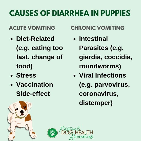 What Causes Diarrhea In Puppies Dog Diarrhea Remedy Dog