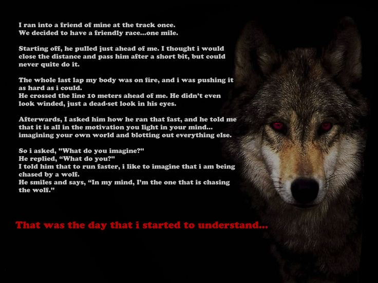 Quotes Navy Seals Be The One Chasing The Wolf Motivated Us Motivational Site Recovery