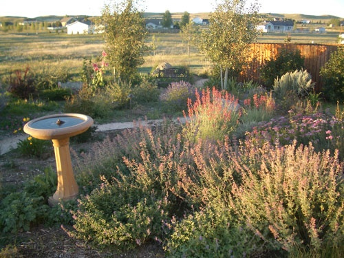 17 Best images about Xeriscape ideas on Pinterest ...