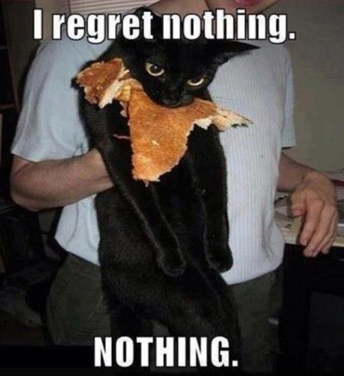 Regret Nothing, Funny Cat, Pancakes, Funny Stuff, No Regret, Funny Animal, So Funny, Kitty, Black Cat