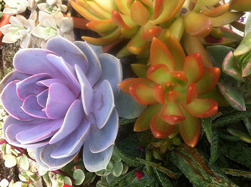 """There has been a recent surge of interest in """"succulents"""". Learn more about this hardy plant and how to incorporate into your home or office."""