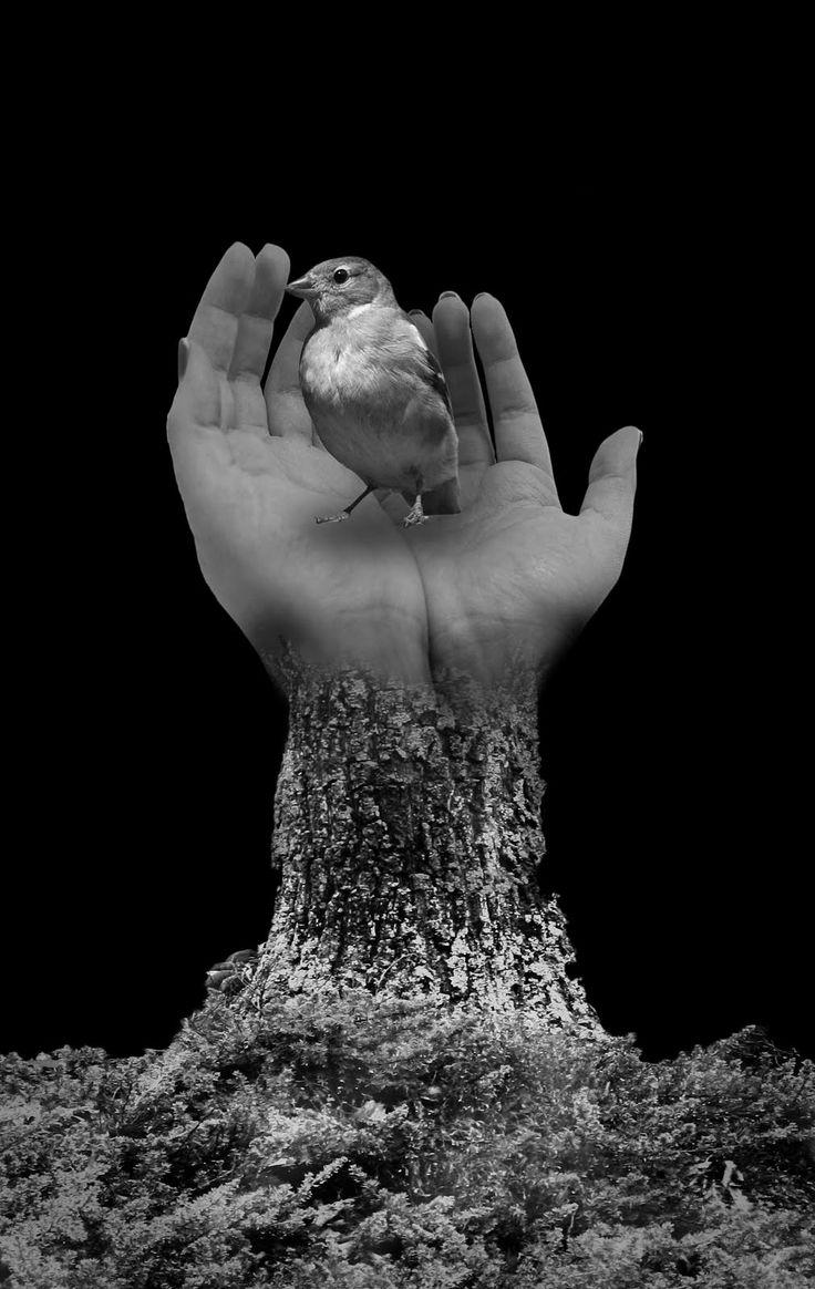 """Tal si fuera un pájaro atrapo el poema. / Lo siento latir en mis manos. / Pero a veces lo aprieto demasiado / y lo destrozo... """"Ars poética"""", Roberto Bolaño."""