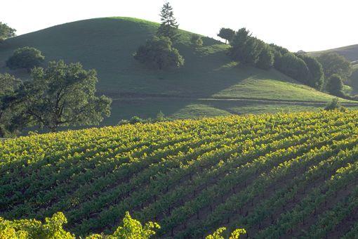 #ridecolorfully through the California Wine Country. #katespadeny #vespaCalifornia Travel, Favorite Places, California Wine, Wine Country, Napa Valley, Country California, Places I D, Fun Things, Sonoma Wine