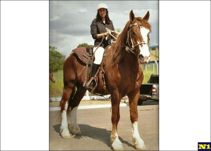 venda de cavalo bretão. Breton breed
