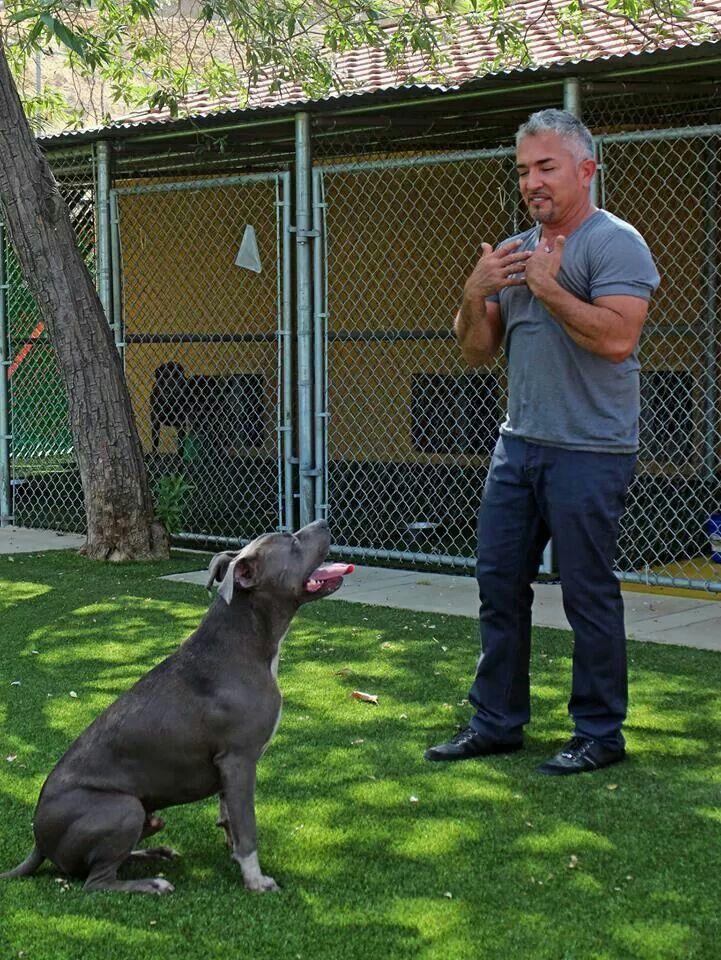 Cesar millan puppy on pinterest cesar millan puppy training cesar