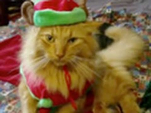 "Animals of YouTube sing ""Jingle Bells"" IS THE CUTEST VIDEO EVER. SEND THIS TO ALL YOUR FRIENDS AND THEY'LL LOVE YOU FOR IT! MEOWY CHRISTMAS"