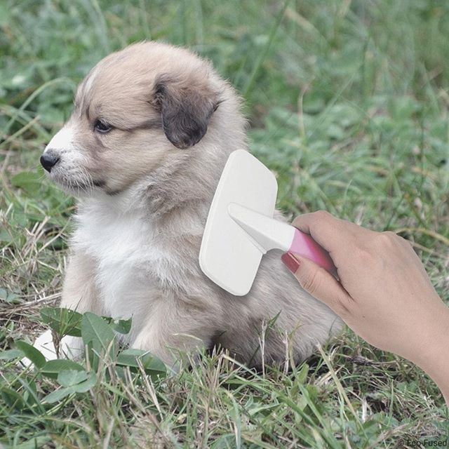 Eco Fused Ecofused Instagram Photos And Videos Pets Pet Care Instagram