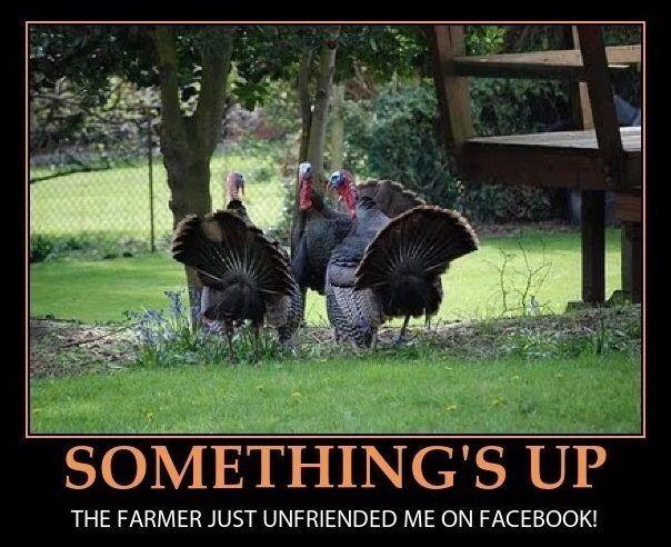 the-turkeys-are-onto-us-meme  #thanksgiving #memes