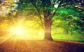 """Luonnon taidetta parhaimmillaan...tässä kuvassa """"aurinkorinne"""", mystisen kaunis kuva, ikuinen tammi ja aurigonvalo..."""