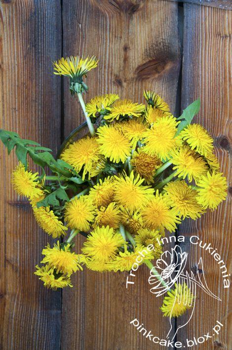 Jadalne kwiaty mniszka